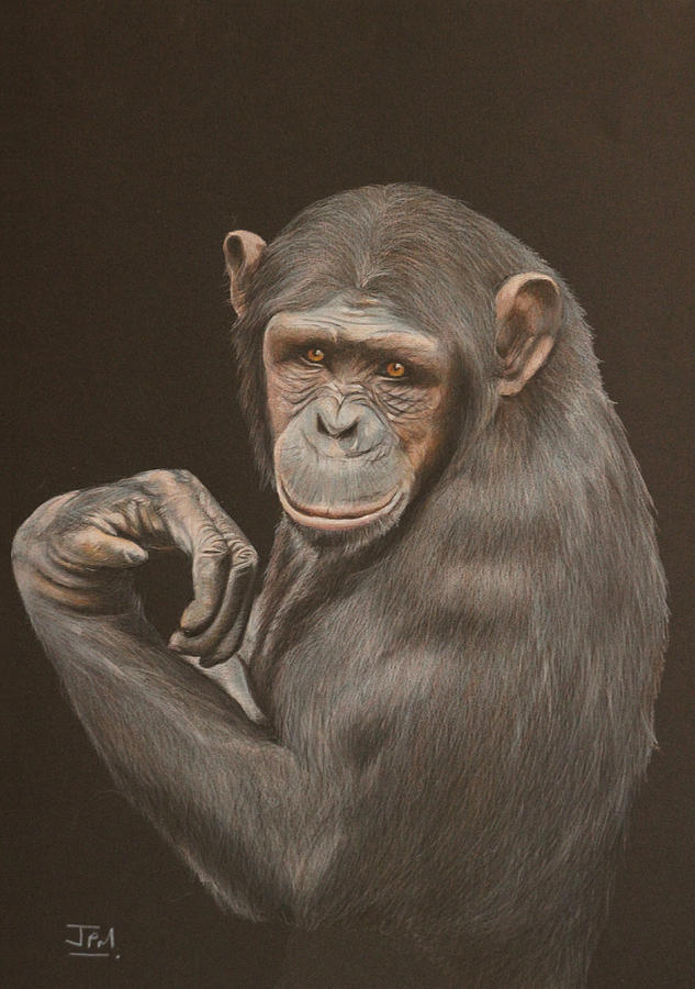 The Arm Wrestler Chimpanzee Drawing By Jill Parry