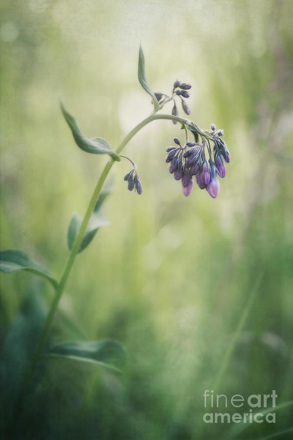 Mertensia Paniculata Photograph - The Arrival Of Spring by Priska Wettstein