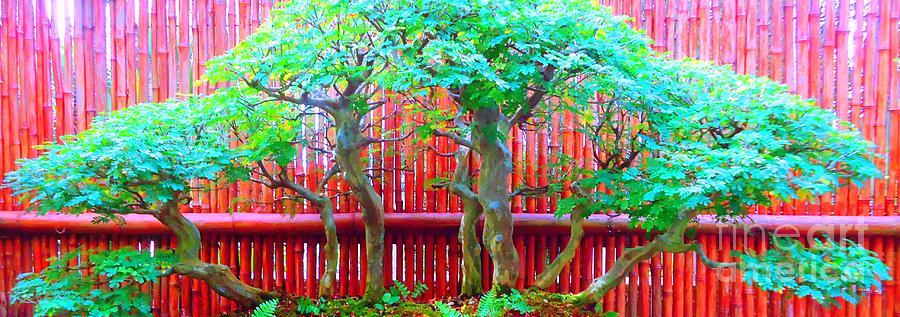 Bonsai Photograph - The Art Of Bonsai by Ann Johndro-Collins
