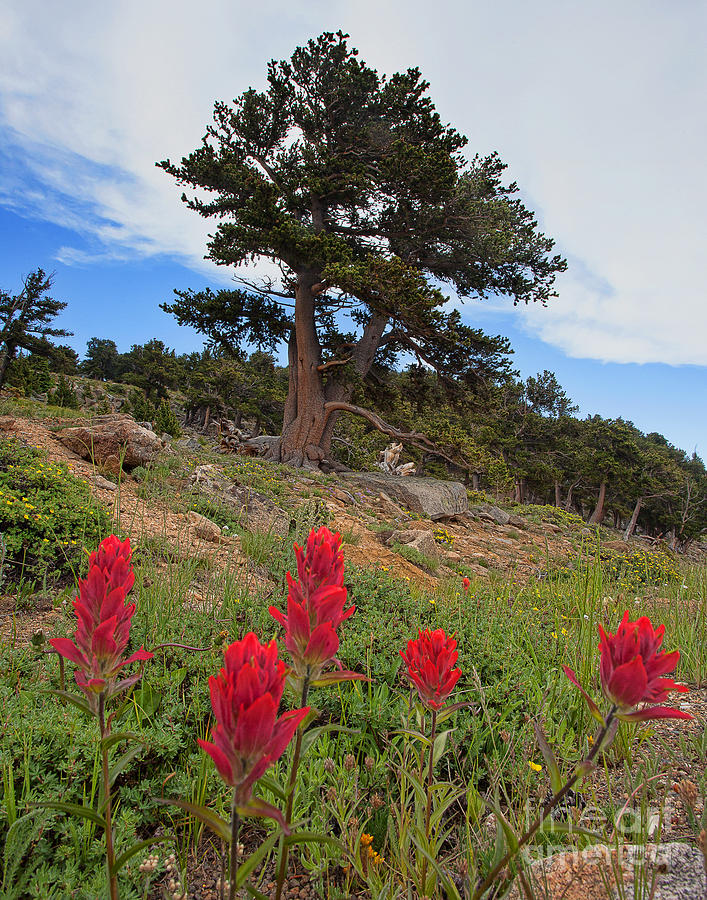 Indian Paintbrush Photograph - The Artists Palette by Jim Garrison