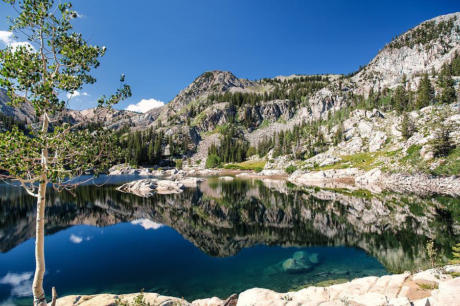 The Aspen Next To Lake Mary Photograph