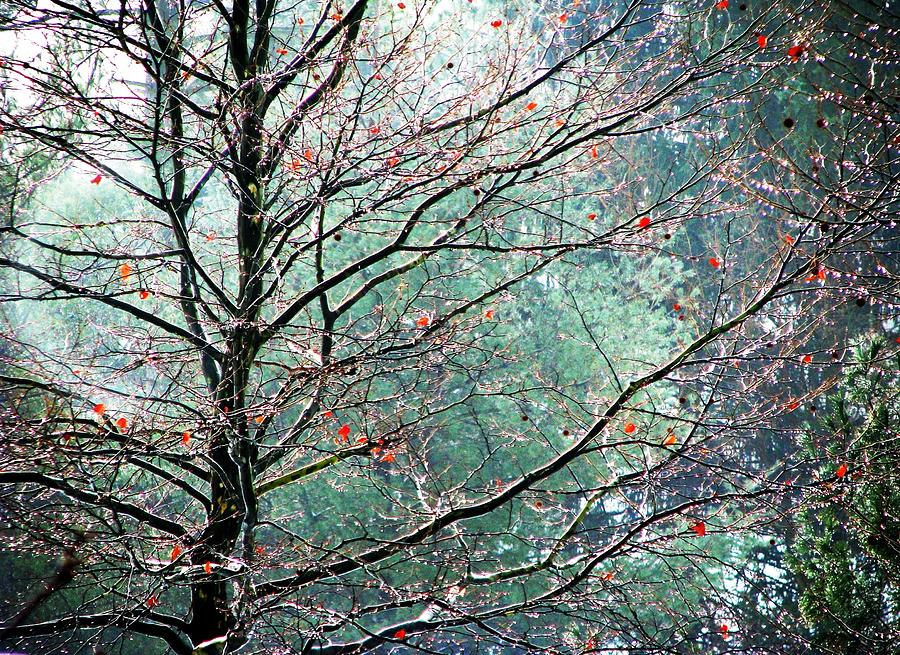 Trees Photograph - The Aura Of Trees by Angela Davies