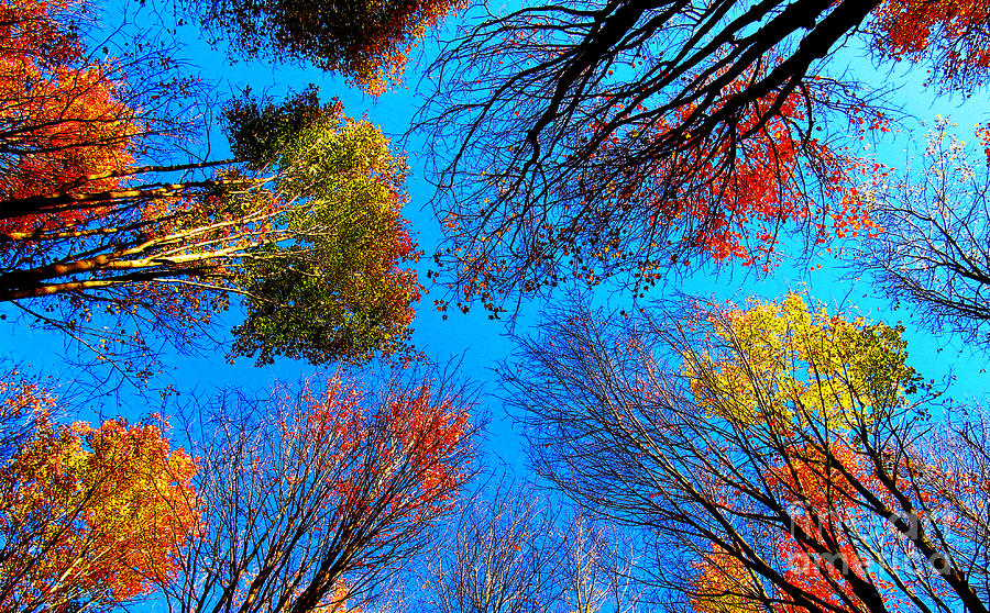 Landscape Photograph - The Autumn Leaves At Potato Creek by Tina M Wenger