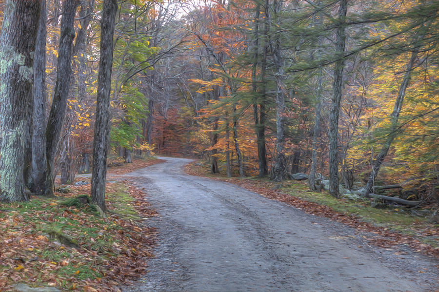 Macedonia State Park Photograph - The Autumn Walk by Zev Steinhardt