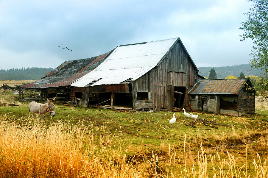 The Barnyard Bunch Photograph by Mary Timman