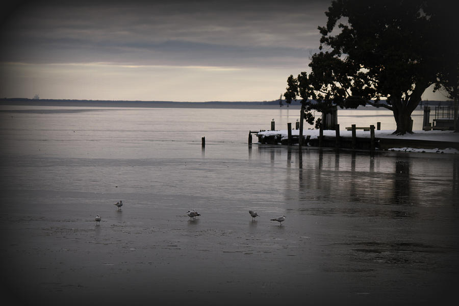 Bay Photograph - The Bay Is Frozen by Carolyn Ricks
