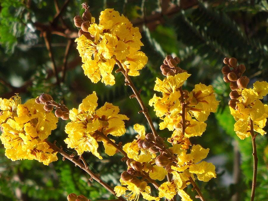 The Beauty Of Flowers Photograph by Prakash Leuva