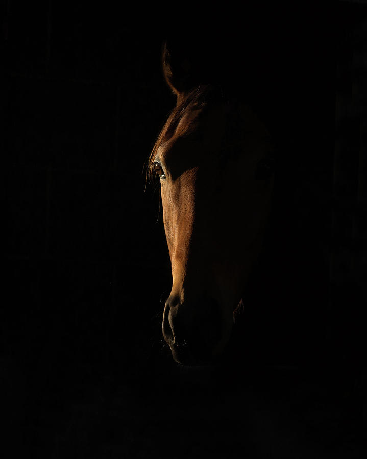 Thoroughbred Photograph - The Beauty Of The Thoroughbred by Sharon Lee Chapman