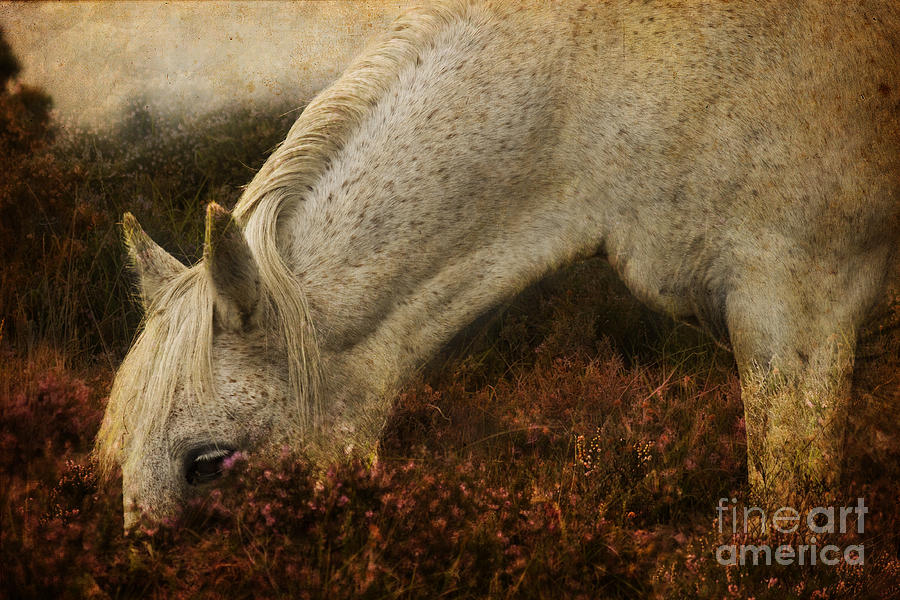 Pony Photograph - The Bed Of Heather by Angel  Tarantella