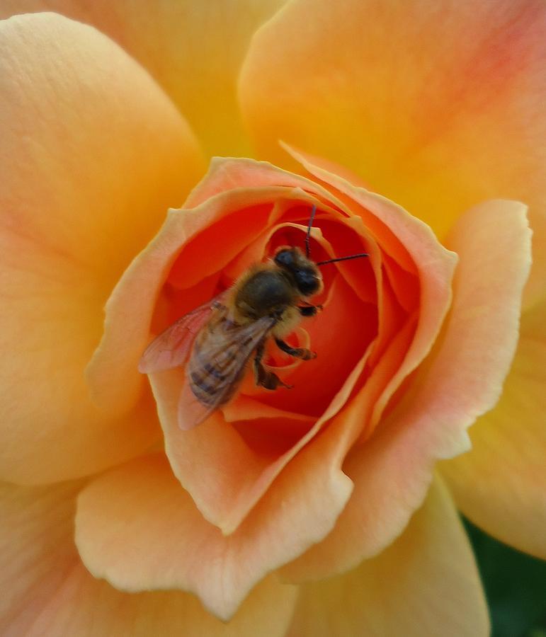 The Beekeeper by Leslie Manley
