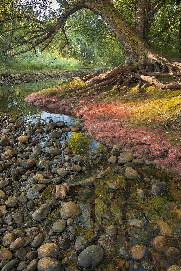 Poudre River Photograph - The Bend by Michael Van Beber