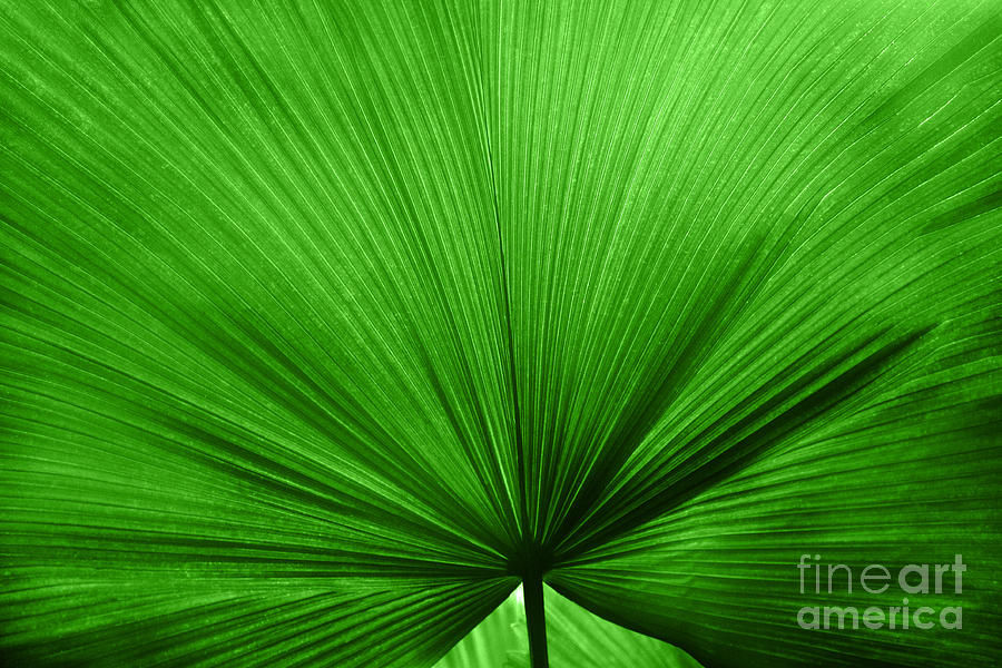 Leaves Photograph - The Big Green Leaf by Natalie Kinnear