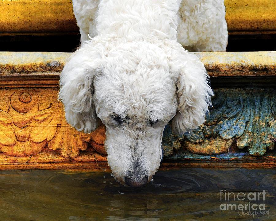 Dog Digital Art - The Big Water Bowl by Judy Wood