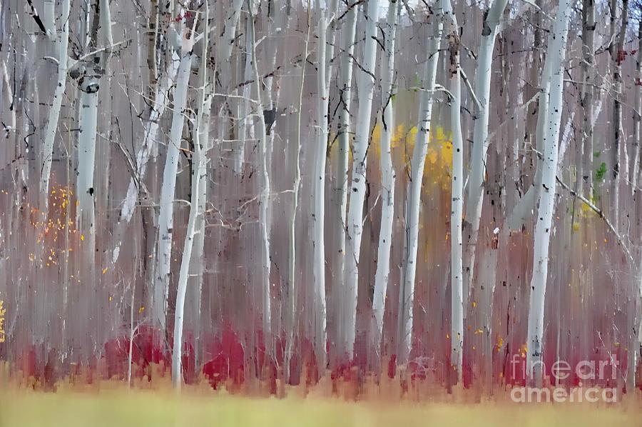 Birch Photograph - The Birches - Single by Andrea Kollo