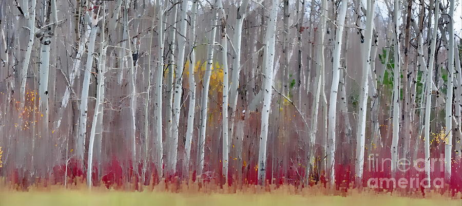 Fall Colors Photograph - The Birches Panorama  by Andrea Kollo