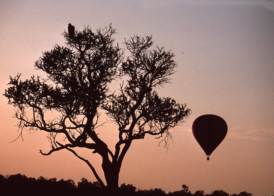 Bird Photograph - The Bird And The Balloon by Carl Purcell