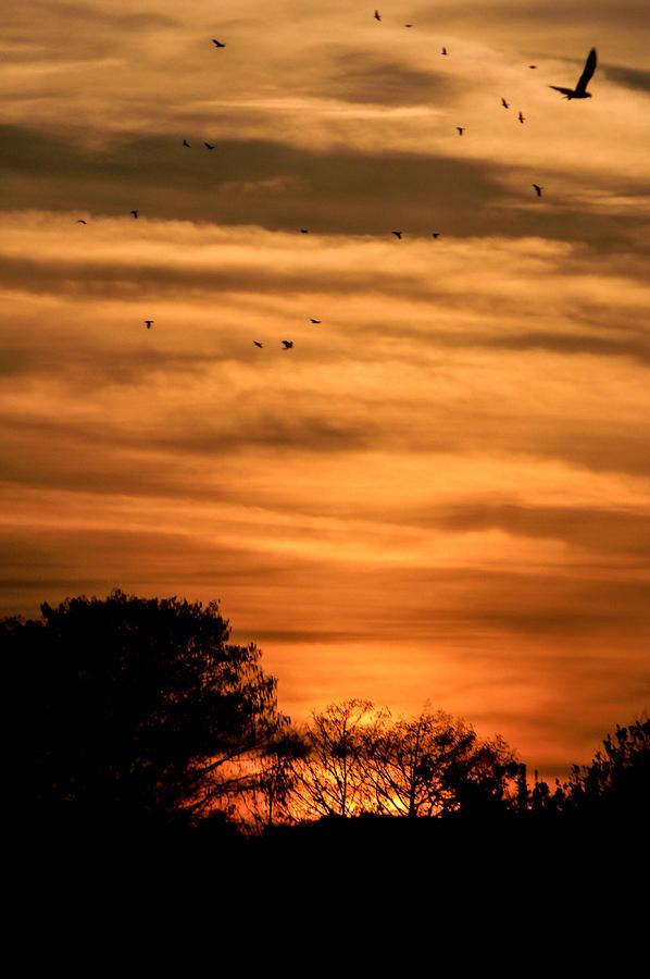Dusk Photograph - The Birds Still Fly by Christy Usilton