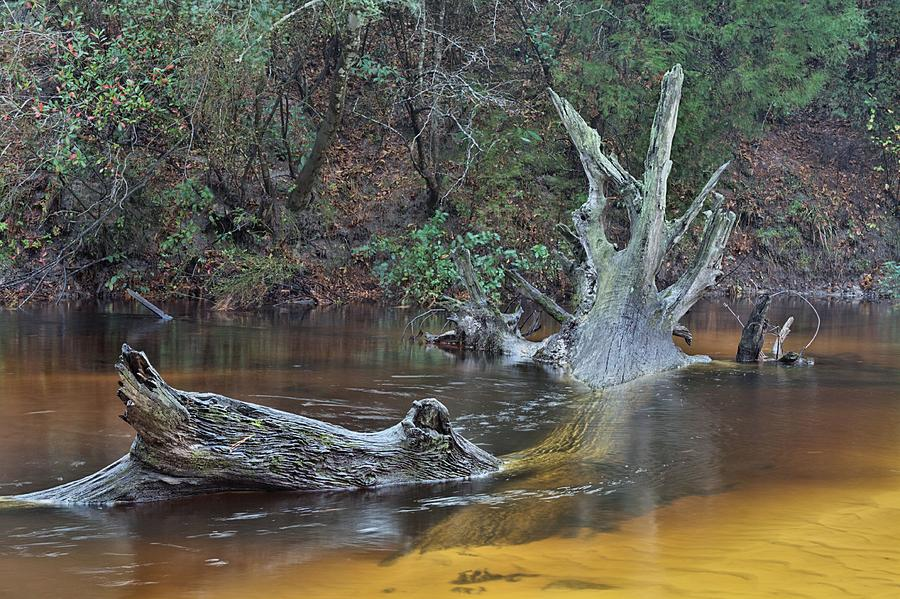 Black Water River Photograph - The Black Water River by JC Findley