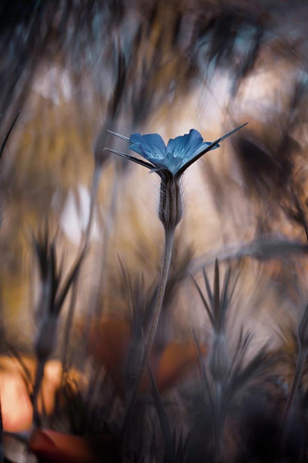 Macro Photograph - The Blue Crown by Fabien Bravin