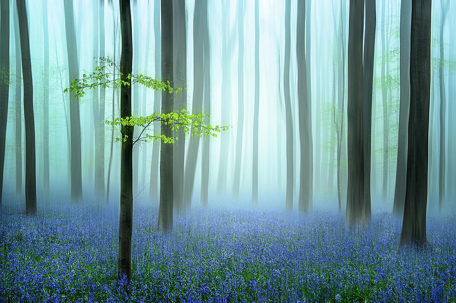 Forest Photograph - The Blue Forest ........ by Piet Haaksma