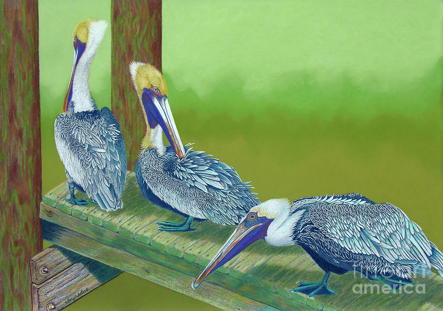 Brown Pelicans Pastel - The Blues Brothers by Tracy L Teeter