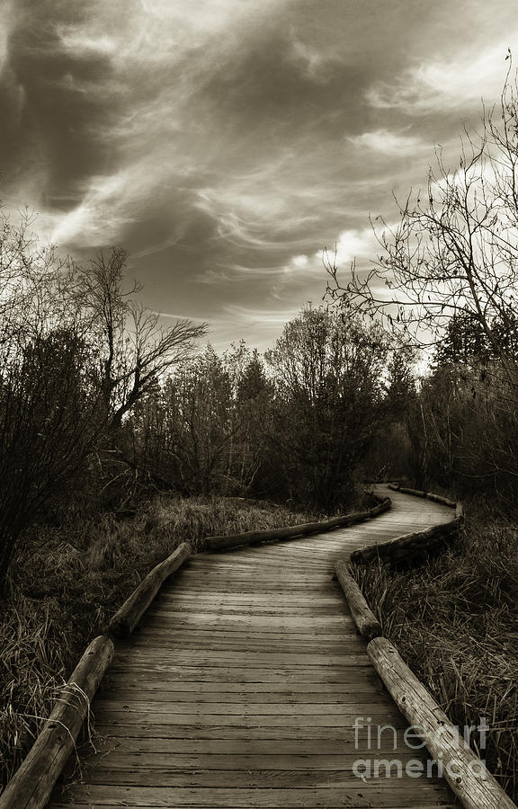 The Boardwalk Photograph - The Boardwalk by Mitch Shindelbower