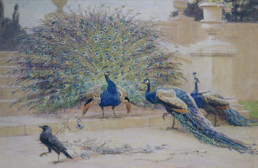 Peacock Painting - The Borrowed Plume by John Charles Dollman