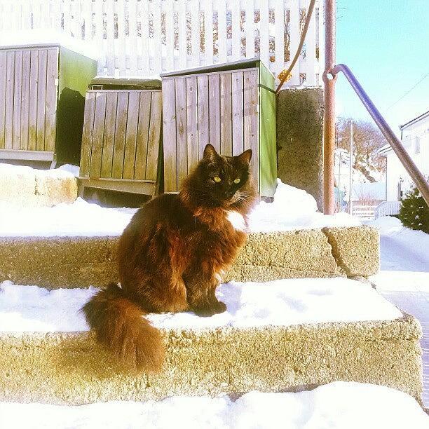 Animal Photograph - The #boss ;-) #cat #cats #catsagram by Line Jensen