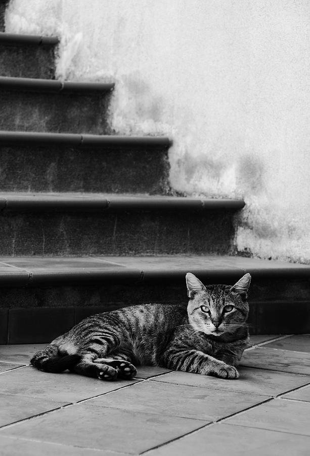 Cat Photograph - The Boss by Laura Melis