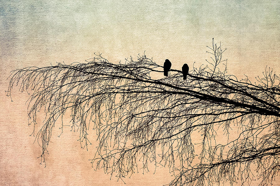 Bird Photograph - The Branch Of Reconciliation 2 by Alexander Senin