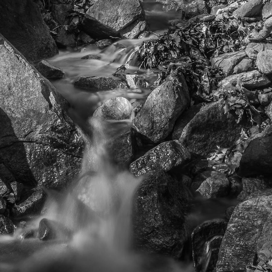 Brook Photograph - The Brook by Jim DeLillo