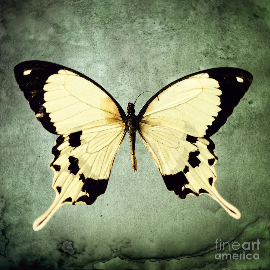 Lepidoptera Photograph - The Butterfly Project 1 by Diane Miller