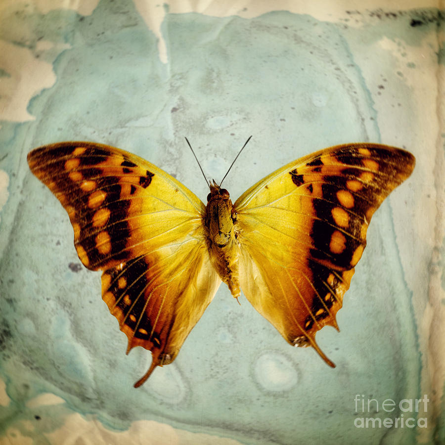Lepidoptera Photograph - The Butterfly Project 6 by Diane Miller