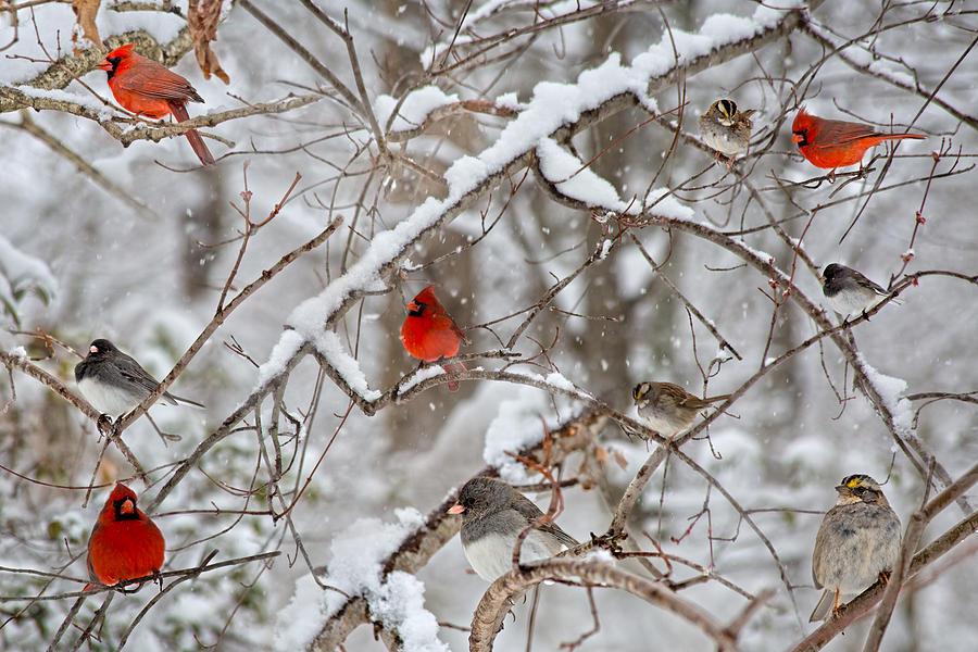The Cardinal Rules Photograph