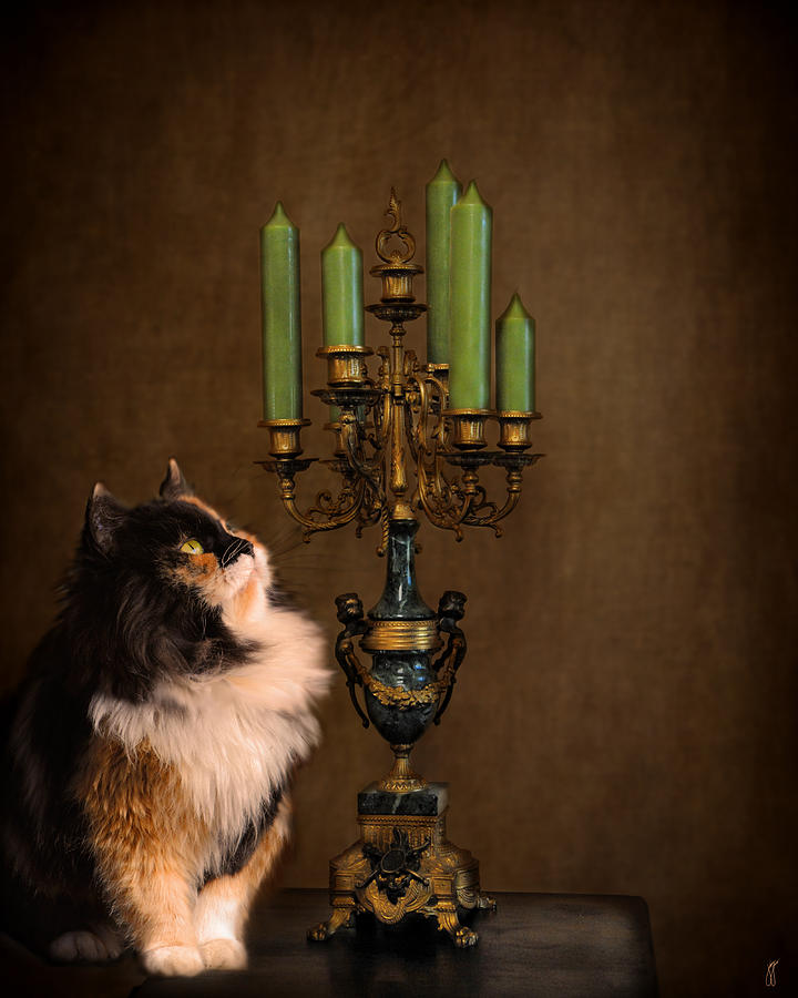Animal Photograph - The Cat And The Candelabra by Jai Johnson