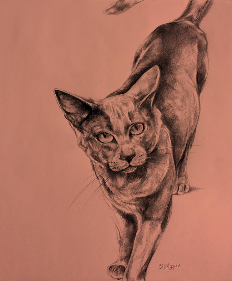 Drawing Drawing - The Cat  by Derrick Higgins