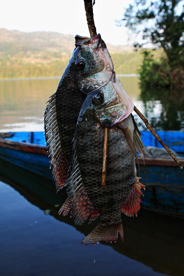 Nepal Photograph - The Catch - Begnas Lake - Nepal by Aidan Moran