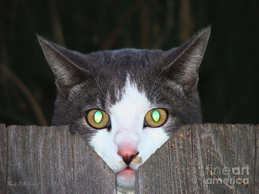 Nature Photograph - The Cats Meow by Wendy McKennon