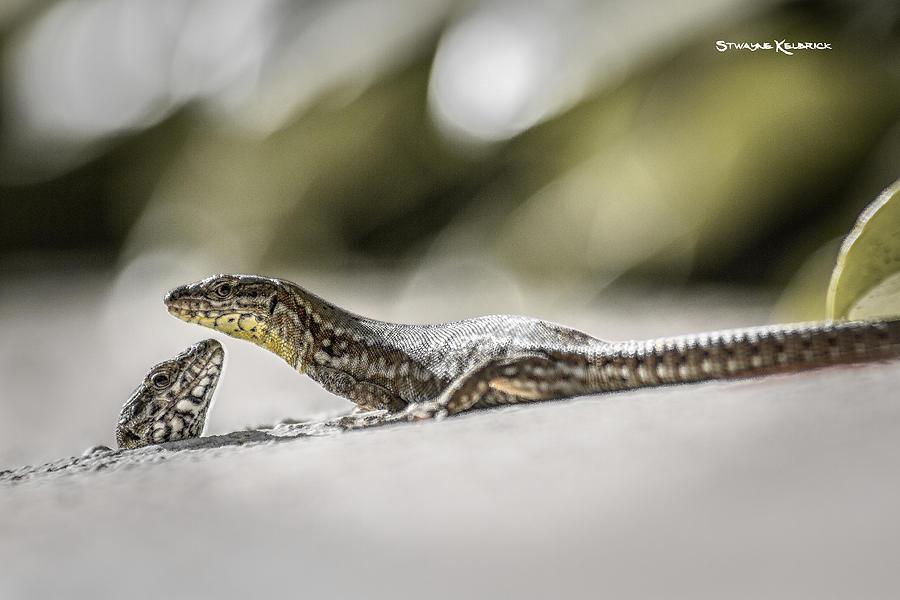 Coronavirus Photograph - The charming lizards by Stwayne Keubrick