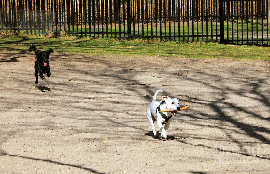 Dog Photograph - The Chase by Charline Xia