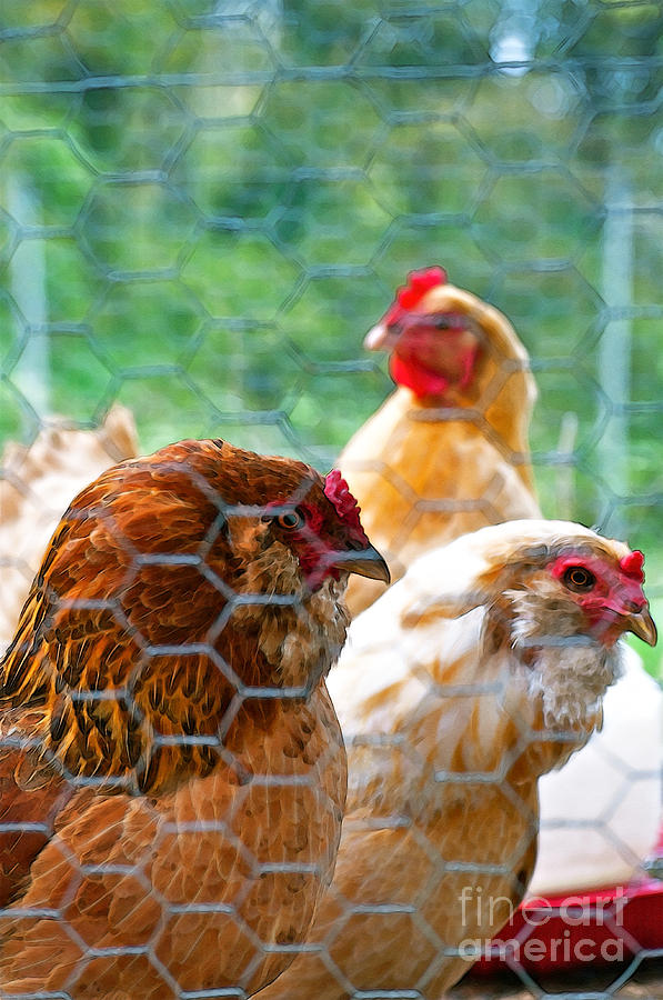 Hens Photograph - The Chickens by Gwyn Newcombe
