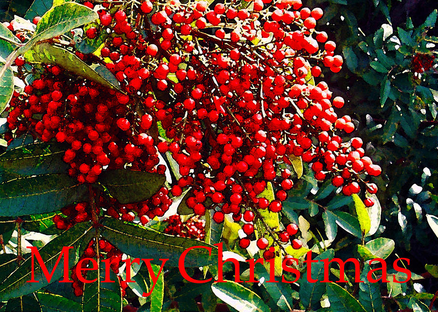James Temple Photograph - The Christmas Berry by James Temple