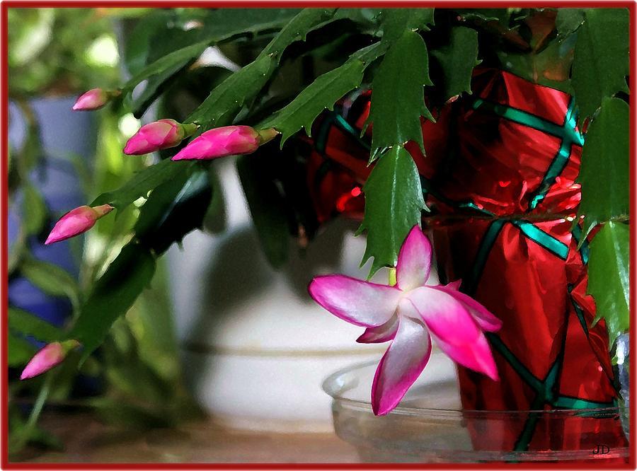 Cactus Photograph - The Christmas Cactus by Jim  Darnall