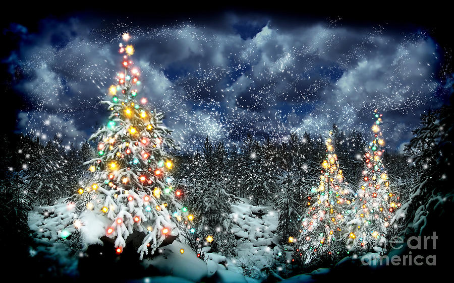 The Christmas Tree Photograph - The Christmas Tree by Boon Mee