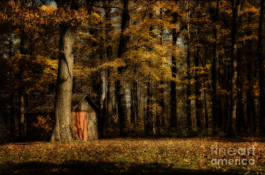 Forest Photograph - The Clearing by Lois Bryan