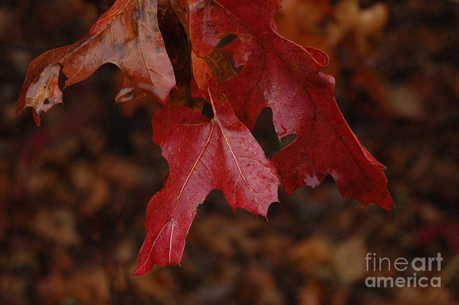 Leaves Photograph - The Color Of Fall by Art Hill Studios