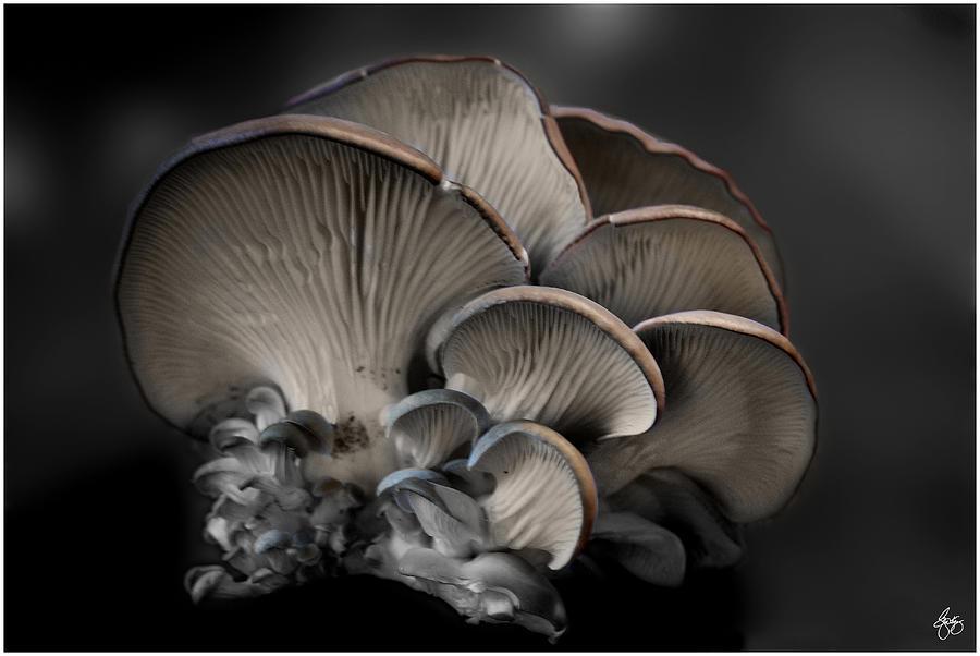 Painted Fungus by Wayne King