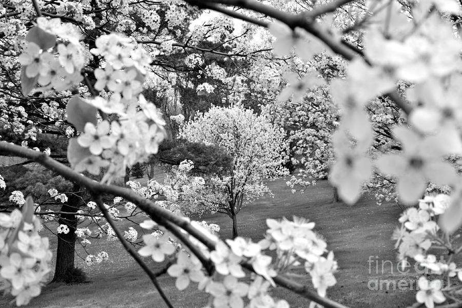 Spring Photograph - The Color Of Spring by Jay Nodianos
