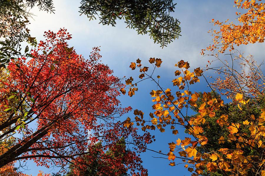 Ny Photograph - Looking Up by MaryGail Perkins