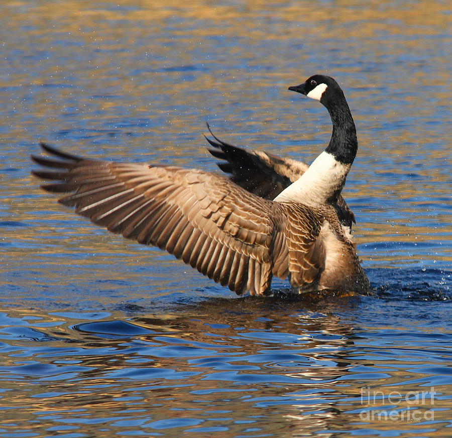 Wildfowl Photograph - The Conductor by Wobblymol Davis